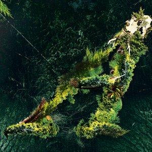 Arborescent