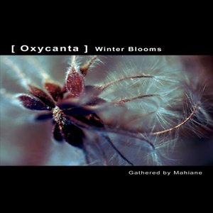OXYCANTA - Winter Blooms