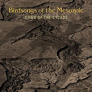 Dawn Of The Cycads
