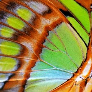 Robin Chasing Butterflies