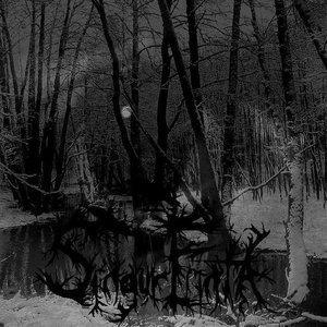 Orfraie Dans la Forêt Vierge