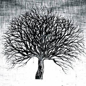 Avatar de Mad Tree