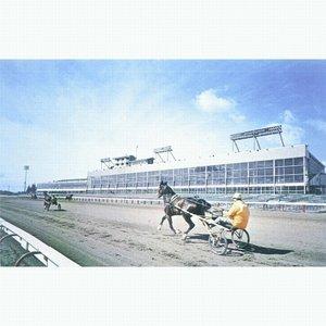 Tracks For Horses
