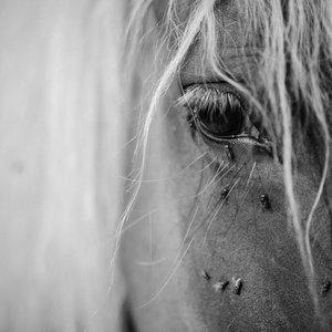 Ti ne poznaš konjev