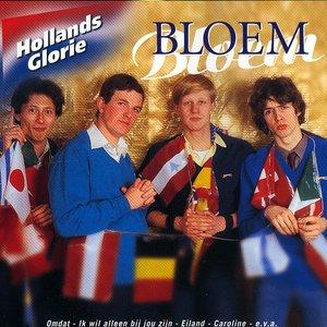 Hollands Glorie - Bloem