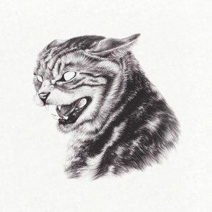 Beta Cat