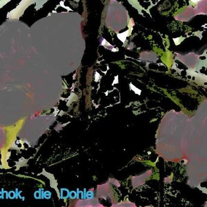 Avatar for Tschok, die Dohle