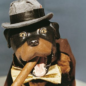 Avatar for Triumph The Insult Comic Dog