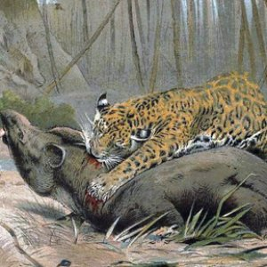 Avatar for Alpha Jaguar