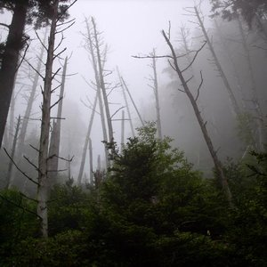Аватар для ghost forest
