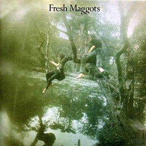Fresh Maggots