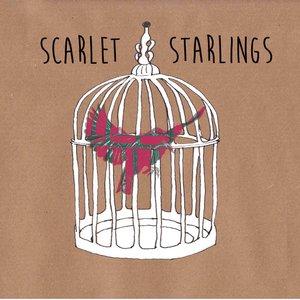 Scarlet Starlings