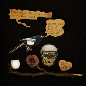 Magpie Billy & The Egg that Yolked (A Study of the Northern Ape in Love)