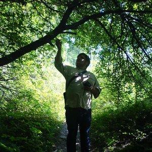 Avatar för Truls and the Trees