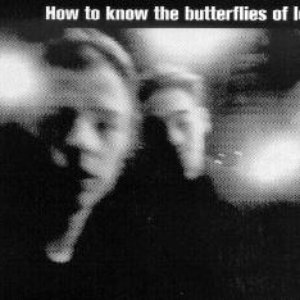 Image for 'The Butterflies of Love'