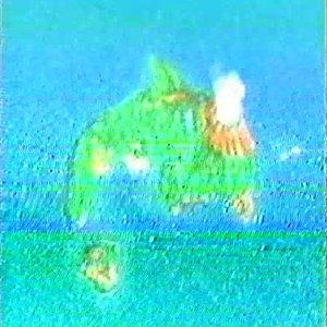 Dolphinアイランド