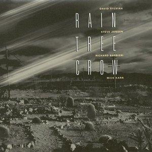 Rain Tree Crow
