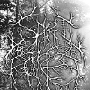 Avatar för Spirit of the Forest