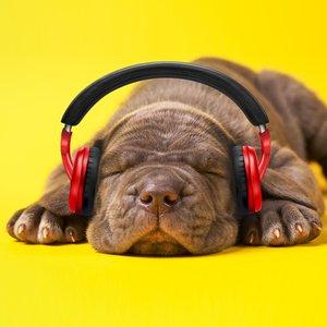 Avatar for Sleepy Dogs