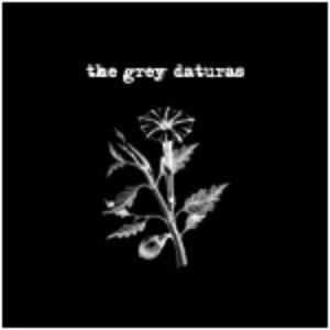 The Grey Daturas