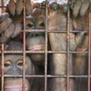 Avatar för Långben Går På Zoo