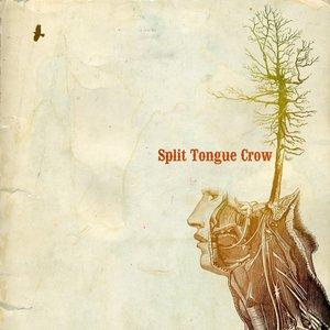 Split Tongue Crow