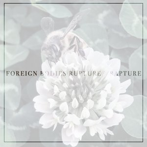 Rupture / / Rapture
