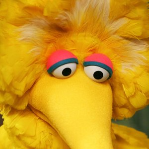 Avatar for Big Bird
