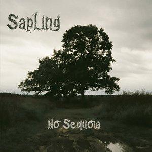 No Sequoia