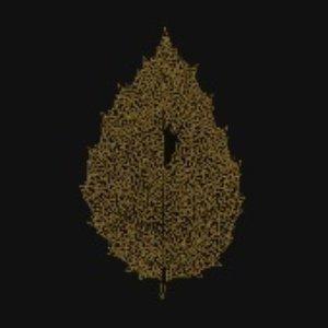 Between Leaves | Forestal