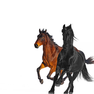 Old Town Road (Remix) [feat. Billy Ray Cyrus] - Single