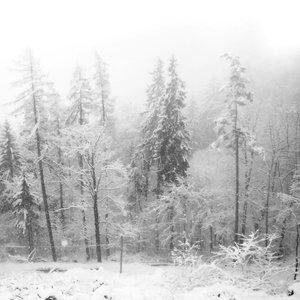 Enthrone In Blizzard