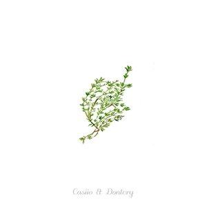 Veggie / Ciruela - Single