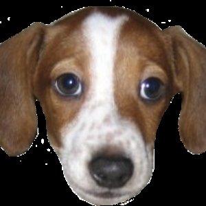 FrankerZ için avatar