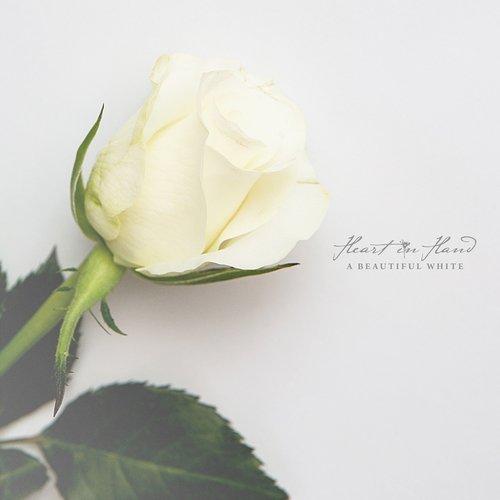 A Beautiful White