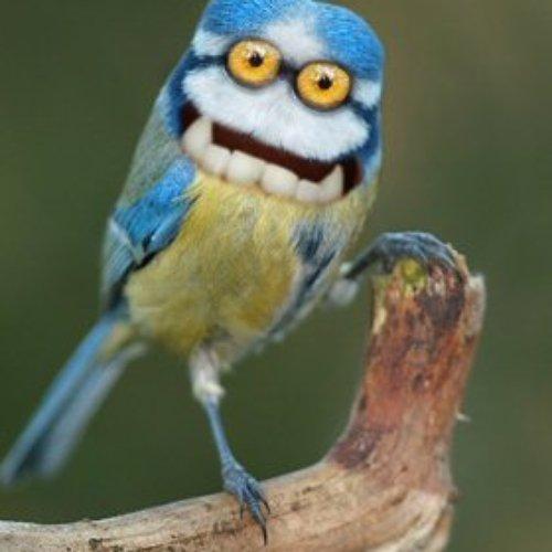 просто прикольное фото птички мозгоклюйки популярная ароматная