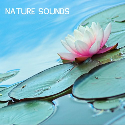 Nature Sounds - Nature Music for Sleep, Yoga and Relaxation