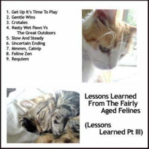 Lessons Learned From The Fairly Aged Felines (Lessons Learned Pt III)