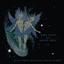 Animal Collective - Spirit They