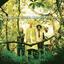 The Derek Trucks Band - Joyful Noise album artwork