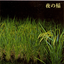Reiko Kudo - Rice field silently riping in the night album artwork