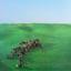 Squid - Bright Green Field album artwork