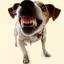 Аватар для fucking_dogs