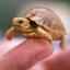 Аватар для Tortoisemaster