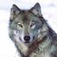 Avatar für Cretanwolf