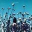 The Creatures - Boomerang album artwork
