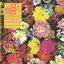 Ra Ra Riot - Superbloom album artwork