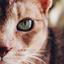 Аватар для MagHaWkGoT