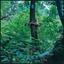 Tomberlin - Projections album artwork