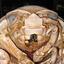 Avatar de Isopoda